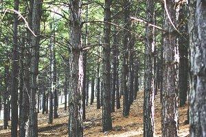 mediterranean forest in Almeria