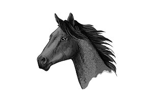 Horse races symbol vector sketch equine head