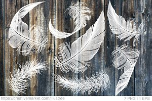 White feathers, vector set