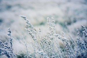 Frozen meadow plants