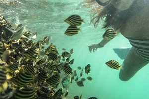 Girl Snorkelling with Striped Fish