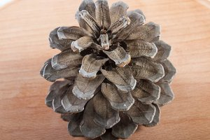 Brown pine cone  .