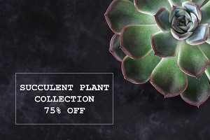 Succulent Plant Collection - 75% OFF