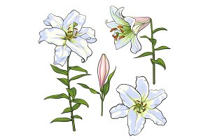 Set of hand drawn white lily flowers, side, top view