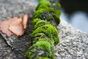 Moss on Rope