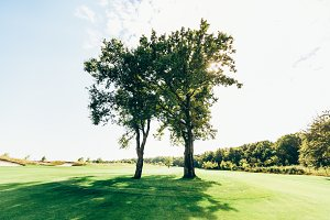 Two romantic trees on field