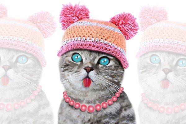 Cat Print-Baby Shower-Cute Cat