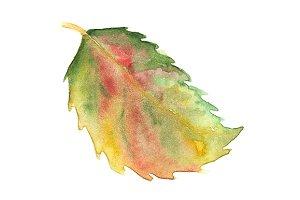 Watercolor autumn fallen leaf