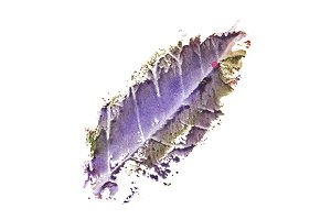 Watercolor autumn fallen leaf