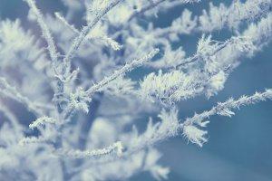 Magic frozen plants