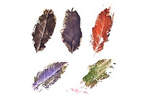 Watercolor autumn fallen leaf set