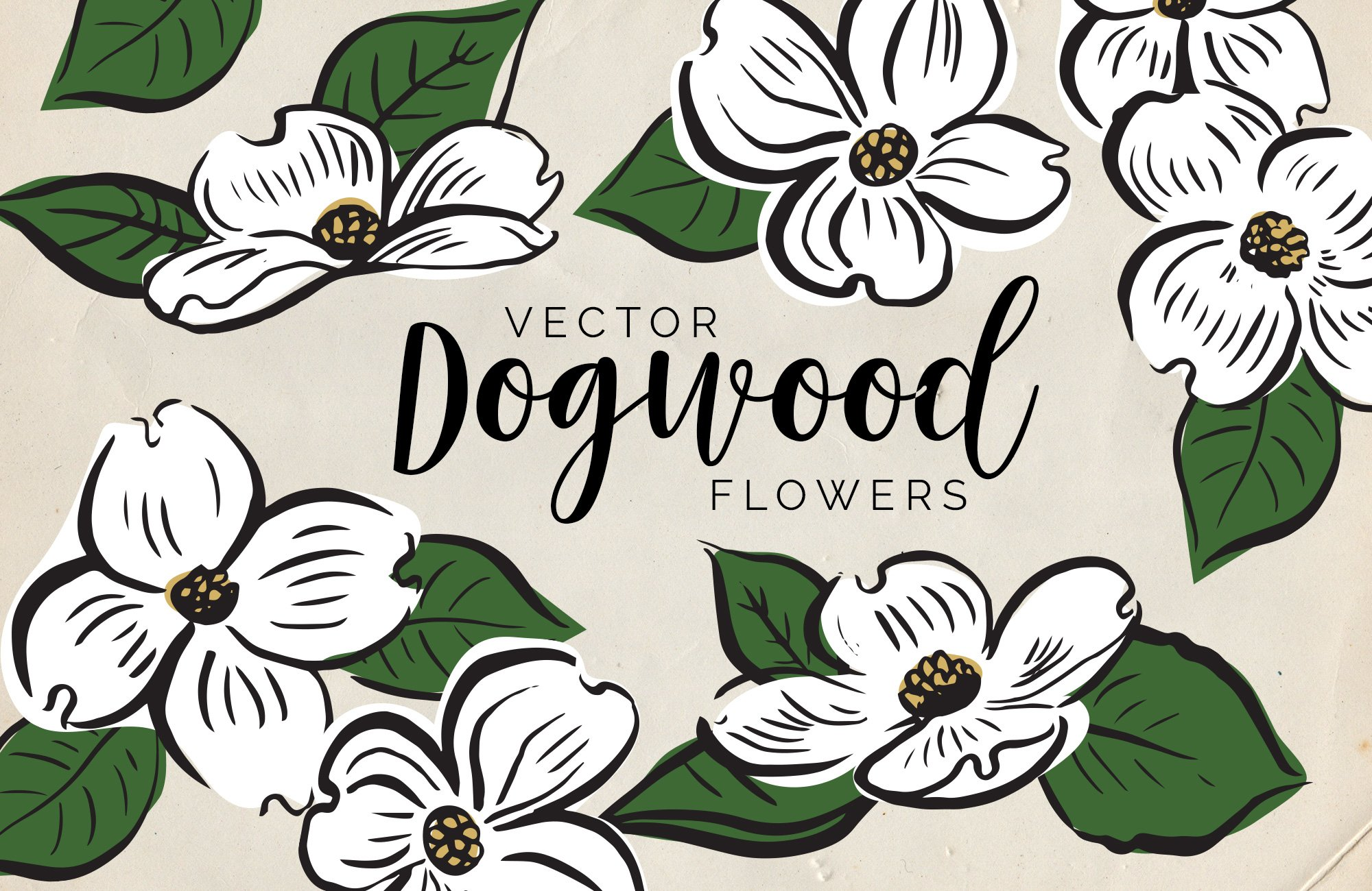 Dogwood Flower Line Drawing : Vector dogwood flowers illustrations creative market