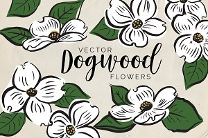 Vector Dogwood Flowers