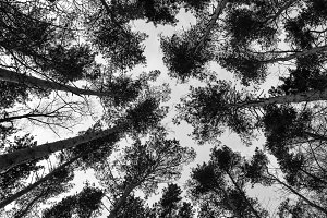Trees in the forest, a view from above