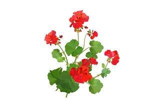 Geranium Bouquets.
