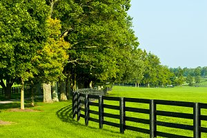 Tree line and fence at horse farm.