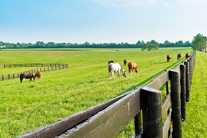 Horses at horse farm.