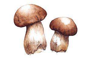 Watercolor porcini mushrooms vector