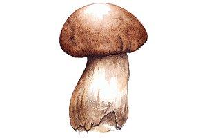 Watercolor porcini mushroom vector