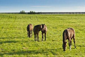 Horses at horse farm