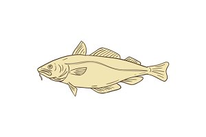 Atlantic Cod Fish Drawing