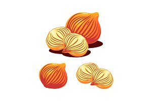 Onion Shallot Vector Illustration
