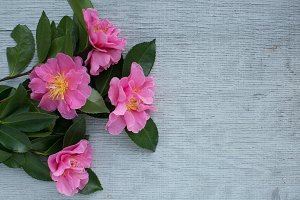 Bouquet of Pink Camellias