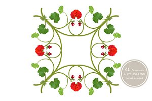 Geranium. Ornamental patterns.