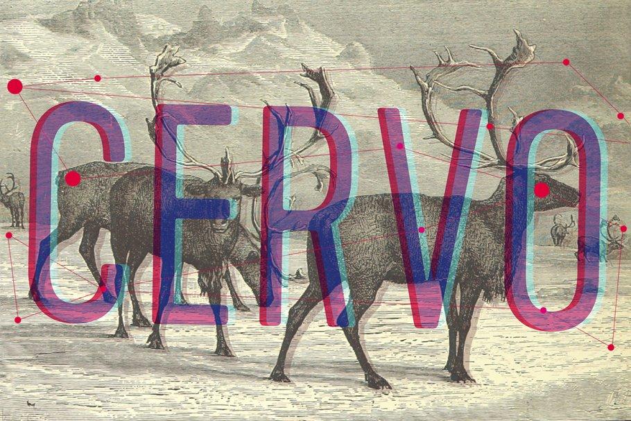 Cervo family fonts