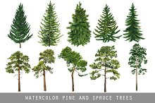Watercolor pine and spruce trees
