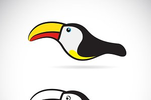 Vector of hornbills. Bird.