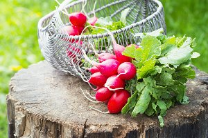 Bunch of fresh red garden radish in a basket on the stump