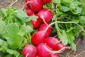 Fresh radishes with tops on a wooden stump sunny day