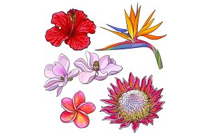Tropical flowers - hibiscus, protea, plumeria, bird of paradise, magnolia