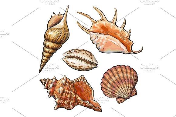 Set Of Various Beautiful Mollusk Sea Shells Isolated Vector Illustration