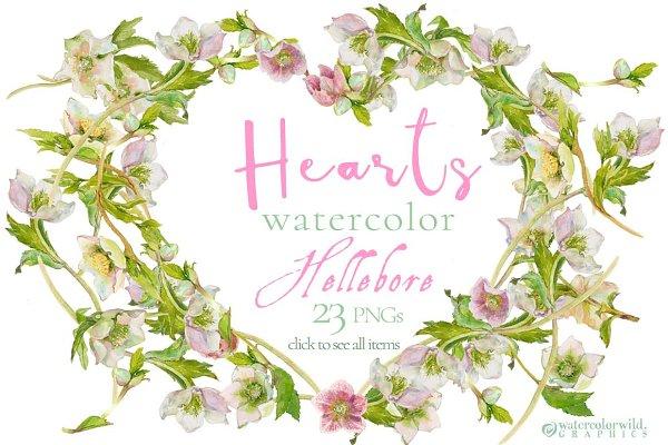 Hearts-watercolor-Hellebore
