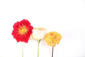 Flower background Red to yellow