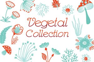 Vegetal Collection