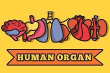 Human organs set illustration vector