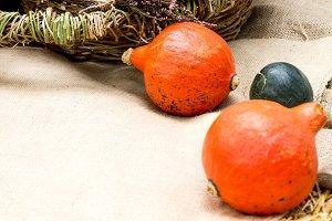 Cucurbita. Gourd.