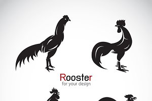 Vector group of rooster.
