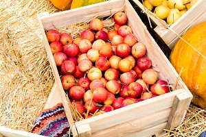 Red apples in a box with pumpkin.