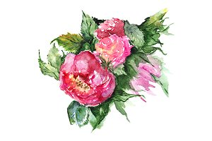 Watercolor flower peony isolated