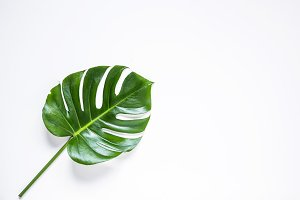 Tropical palm leaf isolated.