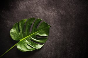 Tropical palm leaf.view from above