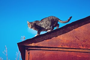 the cat is on a roof