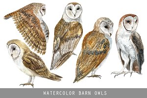 Watercolor Barn Owls