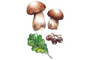 Watercolor oak porcini mushrooms
