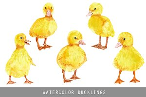 Watercolor Cute Ducklings