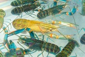 Brotherhood of crawfish or Lobster